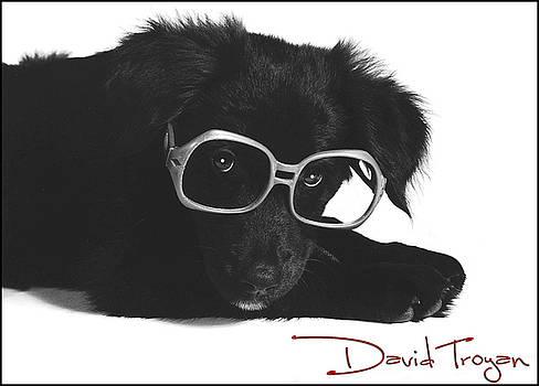 Nikki The Dog by David  Troyan Photography Studios