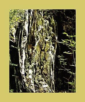 John Feiser - Nixon Geology 2
