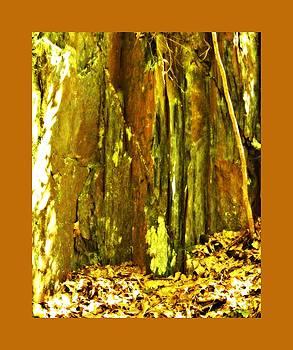 John Feiser - Nixon Geology 4