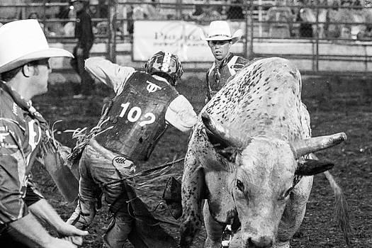 No Bull by Steven Bateson