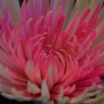 #no Filter #flower #color #d3200 #nikon by Pete Michaud