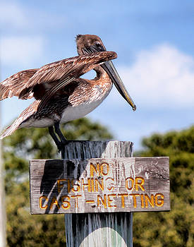 No Fishing Baby Pelican by Tracey R Gates