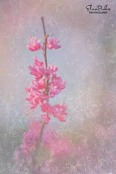 Elvira Pinkhas - No Flower Without Sunshine