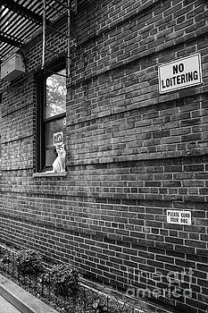 No Loitering by Cole Thompson