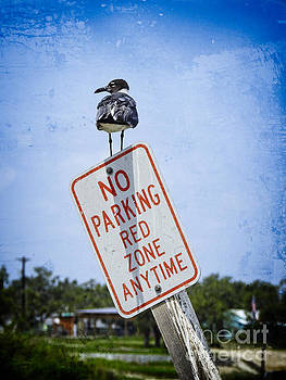 No Parking Red Zone by Ella Kaye Dickey
