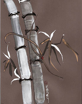 Casey Shannon - Noble Snow Spirit Like Bamboo