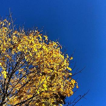#nofilter #blueandgold #treeporn by Ben Berry