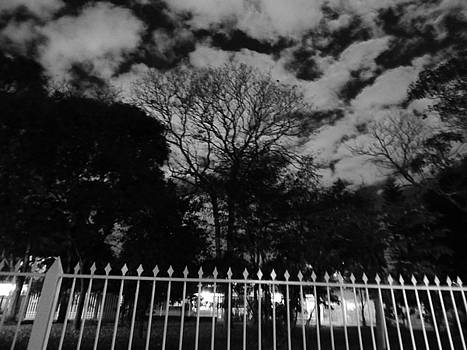 Noir Nature by Beto Machado