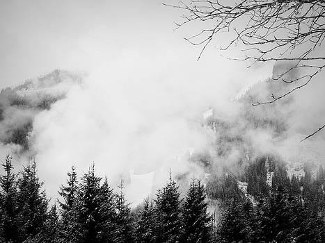 Noiseless I by Anita Kovacevic