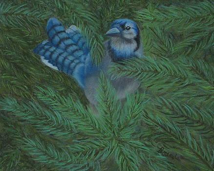 Noisy Blue Jay by Brenda Maas