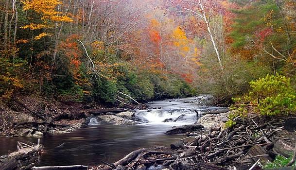 Joe Duket - Noland Creek in Autumn