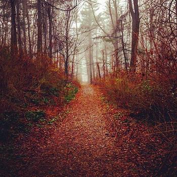 Nolde Forest by Sharon Halteman