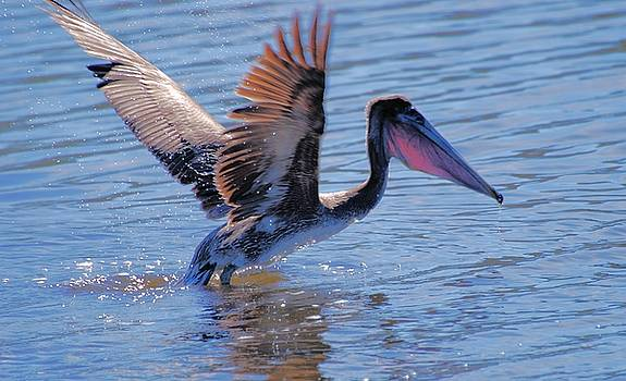 Noontime Takeoff by Robbie L Rogers