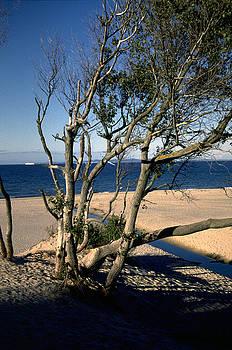 Flavia Westerwelle - Nordic beach