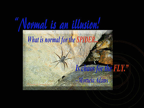 Tamara Kulish - Normal Is An IllusionWhat Is Normal For The Spider Is Chaos For