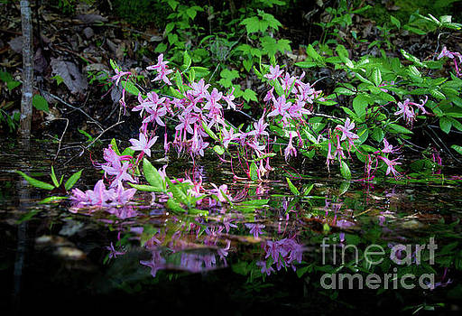 Norris Lake Floral 2 by Douglas Stucky