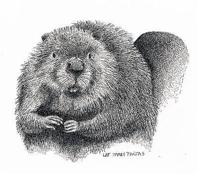 Lee Pantas - North American Beaver