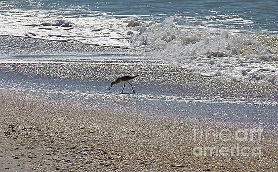 North Captiva Beach Bird by Carol McCutcheon