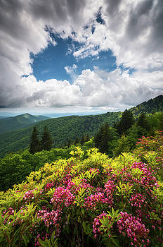 North Carolina Appalachian Mountains Spring Flowers Scenic Landscape by Dave Allen