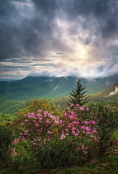 North Carolina Spring Flowers Blue Ridge Parkway Scenic Landscape Asheville NC by Dave Allen