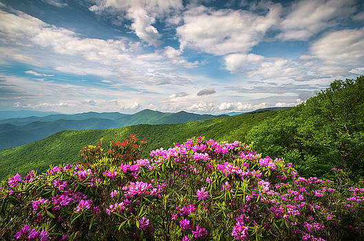 North Carolina Spring Flowers Mountain Landscape Blue Ridge Parkway Asheville NC by Dave Allen