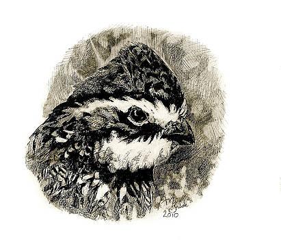 Northern Bobwhite by Abby McBride
