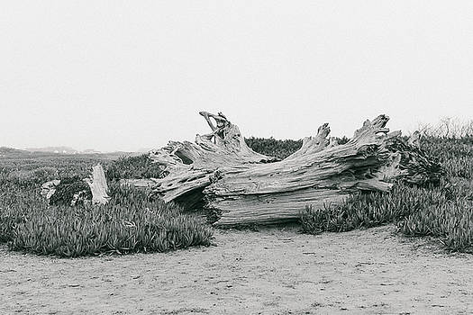 Northern California Seashore by Daniela Safarikova