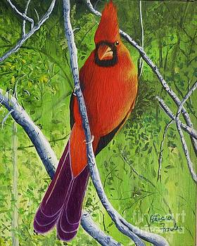 Northern Cardinal 1 by Alicia Fowler