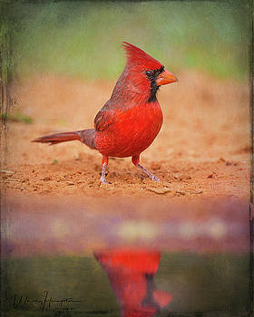 Northern Cardinal - 6056,ST by Wally Hampton