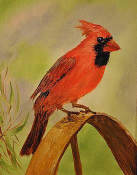 Northern Cardinal by James Higgins