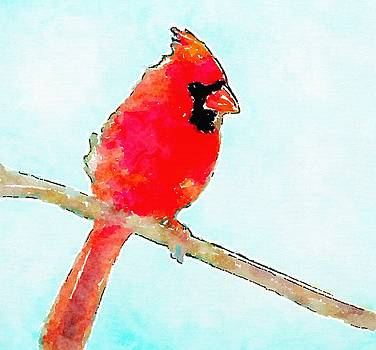 Northern Cardinal by Modern Watercolor Art
