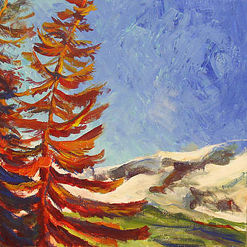 Northern Fir by Marty Smith