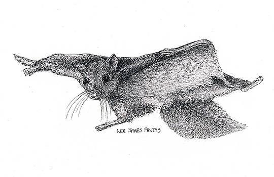 Lee Pantas - Northern Flying Squirrel
