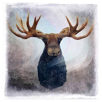 Northern Lights Moose by Michele Carter