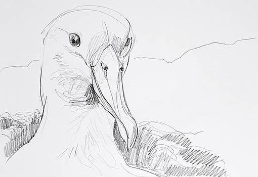 Northern Royal Albatross by Abby McBride