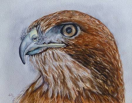 Northern Red Tailed Hawk by Kelly Mills
