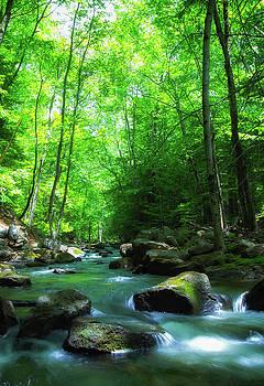 Northwood Brook by John Forde