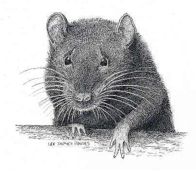 Lee Pantas - Norway Rat