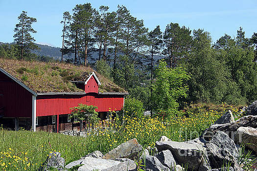 Norwegian Woods by PJ Boylan