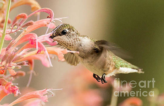 Nose Dive by Pam  Holdsworth