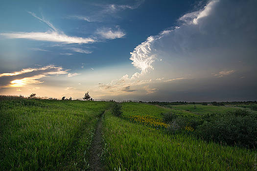 Nose Hill Park by Adnan Bhatti