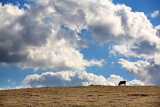 Not a Cow in the Sky by Peter Tellone