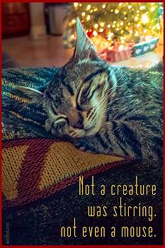 Not a Creature was Stirring by Debbie Karnes