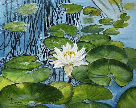 Not a Monet by Connie Rowsell
