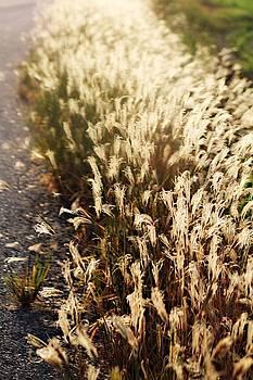 Not just weeds by Trisha Scrivner