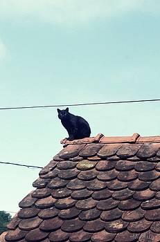Not on a Hot Tin Roof by Marija Djedovic