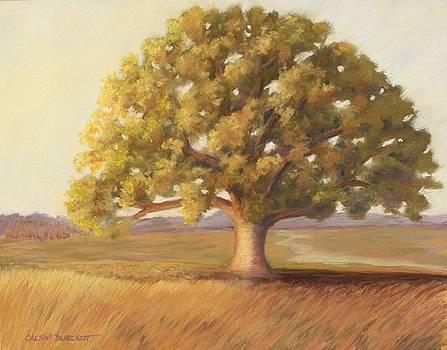 Not Quite Twilight by Regina Calton Burchett