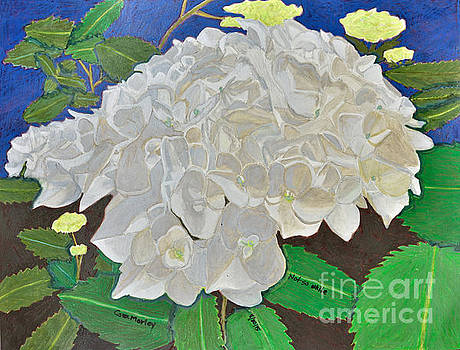 Not So White by Cora Morley Eklund