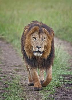 Notch, King of the Mara by Sandy Schepis