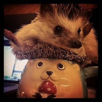 Nothing Like A Cup O' Hedgehog To by Emily Botelho